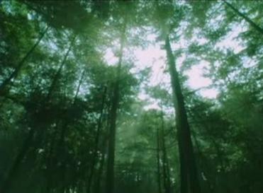 眠れる森.png